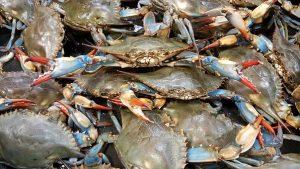 crab-2124136__340