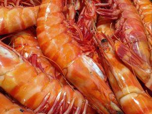 shrimp-1141476__340