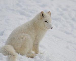 arctic-1694816__340