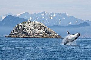 humpback-whale-1744267__340