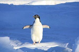 penguin-56101__340