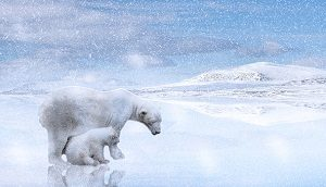 polar-bears-2800429__340